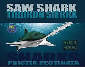 3D model pectinata Saw Shark