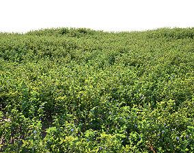 3D Blueberry Bushes