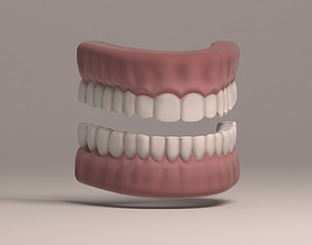 Human Teeth and Gums 3D model VR / AR ready
