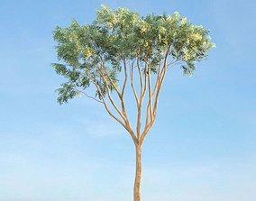 3D Tree Ulmus Campestris Curio