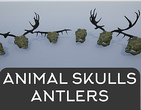 3D asset Animal Skulls and Antlers