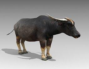 3D model Water Buffalo Animated