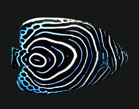 Juv Emperor Fish 3D asset