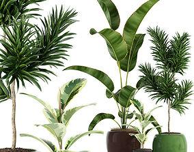 Plants collection 85 3D model