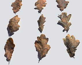 Dry Oak Leaves Pack 3D model