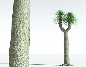 EVERYPlant Compact-Leafed Sigillaria 09 --18 Models-- 3D