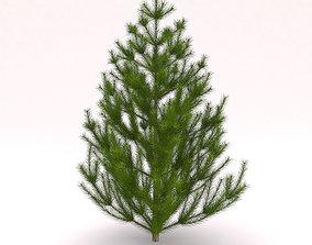 Conifer Tree bush 3D model