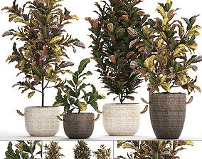 Collection of exotic plants Croton 432 3D