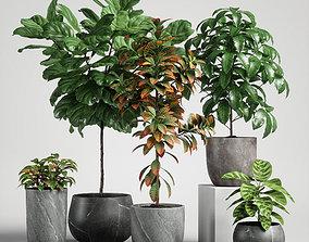 calathea plants set 11 3D model