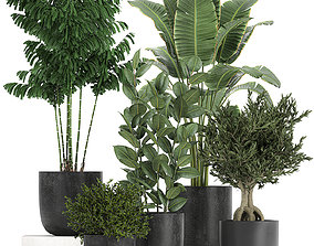 3D model Collection of decorative plants in flowerpots 808