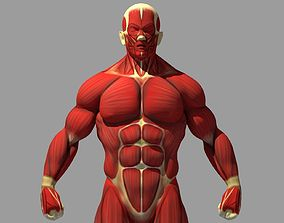 3D model Muscle Anatomy Reference