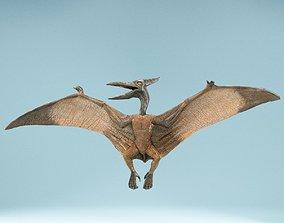 Pterodactylus 3D asset