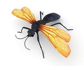 3D asset Tarantula hawk