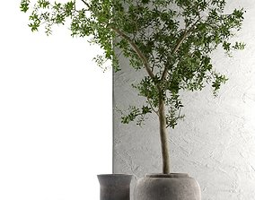 3D Outdoor Pots with Olive Tree