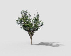 Tree 3D model low-poly