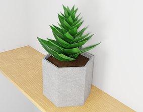 3D model potted succulent plant