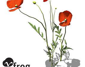 XfrogPlants Field Poppy 3D model