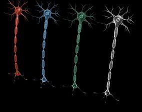3D model Neuron 4