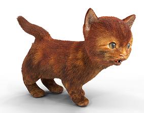 3D model Red Cute hair fur Cat Animated