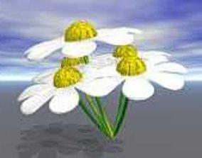 Daisy flower 3D model