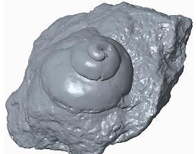 Snail fossil 3D print model