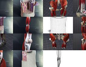 Lower Skeletal System 3D