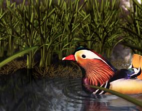 duck animation 3D asset