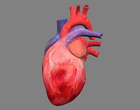 Heart Animated 3D model
