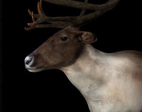 3D asset Deer Caribou