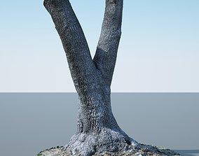 3D model Tree Trunk - 09