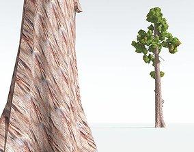 EVERYPlant Coastal Redwood Cartoon 12 --12 3D asset