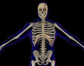 X-Ray Skeleton Rigged Male 3D model