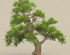 3D asset Tree 06