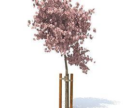 Apple tree 3D model bloomy