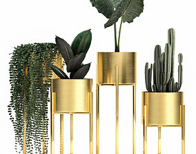3D Houseplants in a gold pot for the interior 907