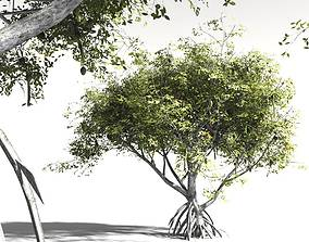 EVERYPlant Red Mangrove 05 -- 7 Models 3D