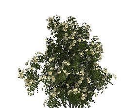 dogrose rose canina no3 3D