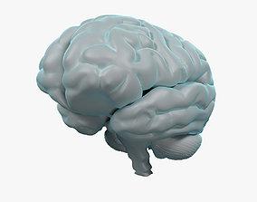 Human Brain 3D model head