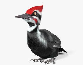 Woodpecker HD 3D model