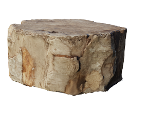 Old Log Medium Poly Model