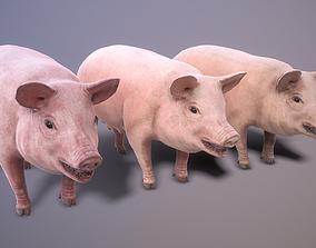 Pig rigged PBR 3D model