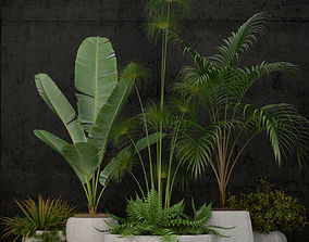 Plants collection 80 decor 3D model