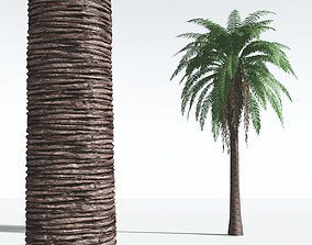 EVERYPlant Date Palm 03 --16 Models-- 3D