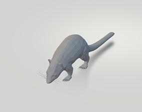 3D model Coati