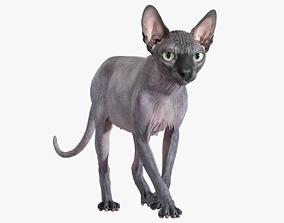 Sphynx Cat Black Animated bald 3D