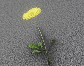 Low-Poly Dandelion Flower Version 2 - Object 8 3D asset