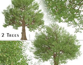 3D Set of Field Elm or Ulmus minor Trees - 2 Trees