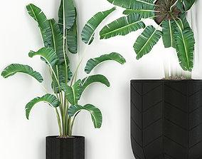 Plants collection 243 3D model