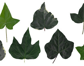 3D English Ivy Texture Pack - 17 Textures