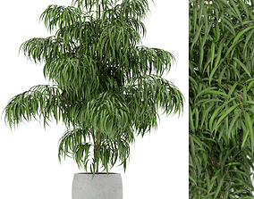 3D model Plants collection 156